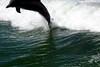 Jet Boat Dolphin Cruise Feb21_10