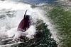 Jet Boat Dolphin Cruise Feb21_8