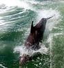 Jet Boat Dolphin Cruise Feb21_6