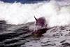 Jet Boat Dolphin Cruise Feb21_9