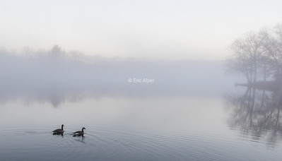 Lake Ripple foggy morning, Grafton MA