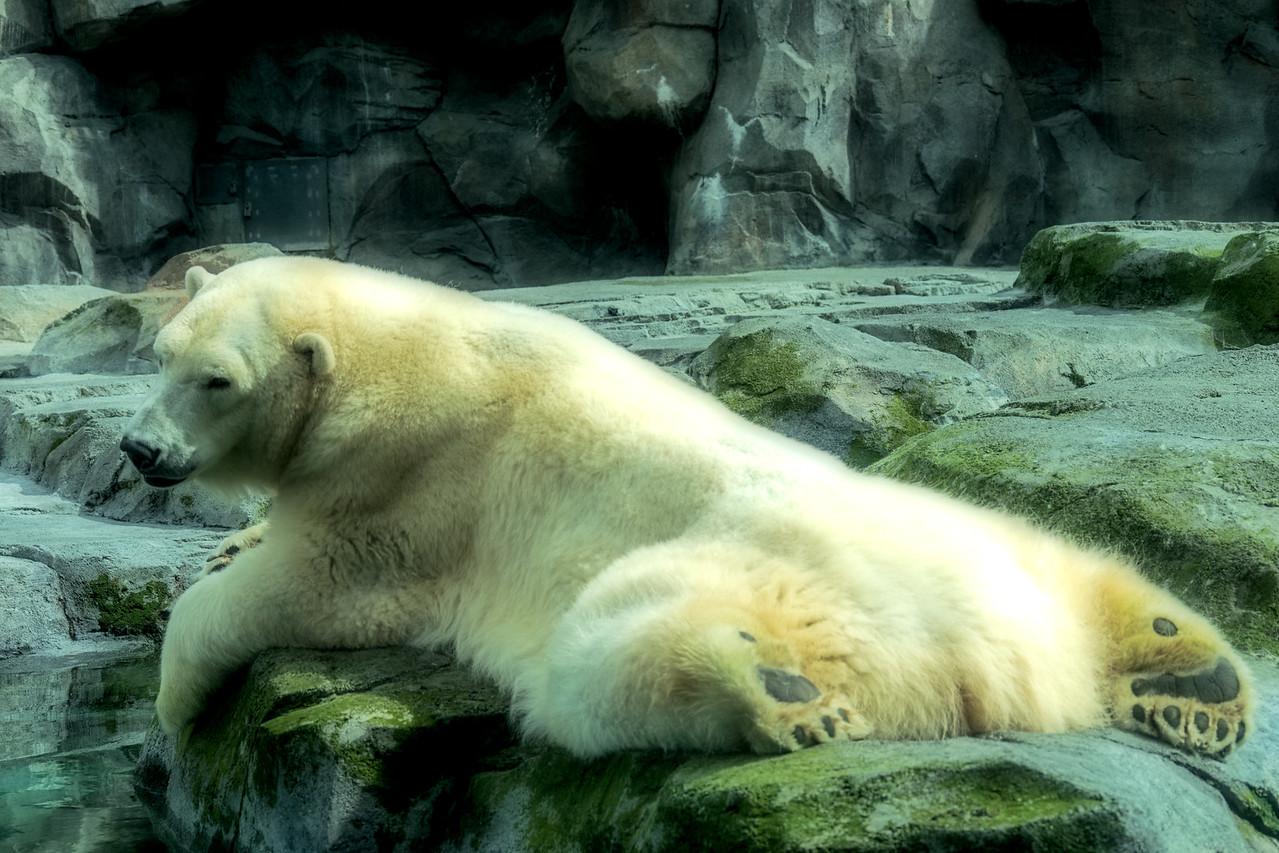 Bear #2-Blurred...Fav I think