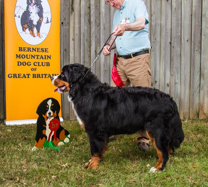 Best Puppy & 1st Puppy Dog