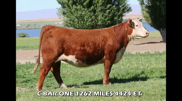 2016 Colyer Herefords 15th Annual Fall Female Sale