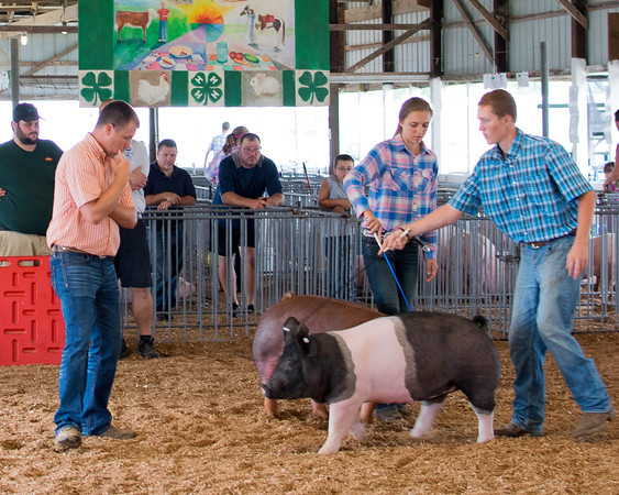 Judge Will Rincker (left) decides which pig to choose while Lea Brummer (center) and Jared Kollmann (right) try to show off their pigs in a way they hope the judge will like.<br /> Trent Pearcy photo