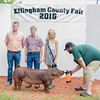 Ethan Weidner (center left) showed off his swine at the Effingam County Fair on Tuesday. He is joined by Will Rincker (left), the judge of the swine contest, and Emma Hewing (center right), Junior Miss Effingam County Fair Queen while Ben Kemme keeps the swine still.<br /> Trent Pearcy photo