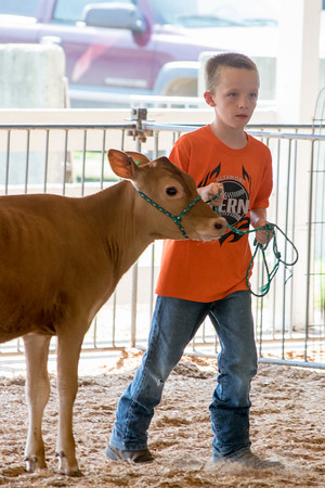 Cooper McManaway entered his calf in the dairy<br /> competition at the Effingam County Fair.<br /> Trent Pearcy photo