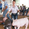 Mackenzie Hoene tries to guide her pig away from another at the Effingam County Fair on Tuesday.<br /> Trent Pearcy photo