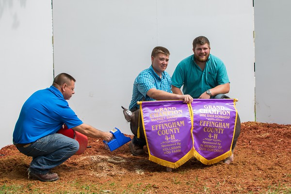 Devin Ammann (right) presents Bradley McHarry (center) with two Grand Champion awards, one for Market Barron and the other for Swine Senior Showmanship, while Dodd Schnepper (left) keeps the swine from moving.<br /> Trent Pearcy photo