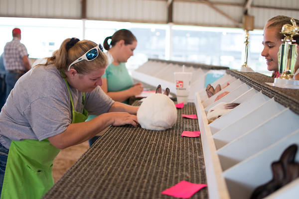Jackie Graves, one of three judges at the rabbit show at the<br /> Effingam County Fair, judges a rabbit entered in the contest.<br /> Trent Pearcy photo