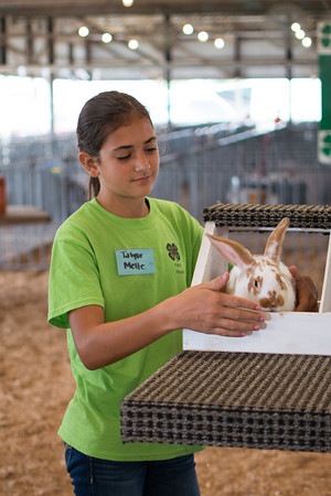 Taylor Mette tries to get her rabbit to stay still for<br /> judging in the rabbit show at the Effingam County Fair.<br /> Trent Pearcy photo