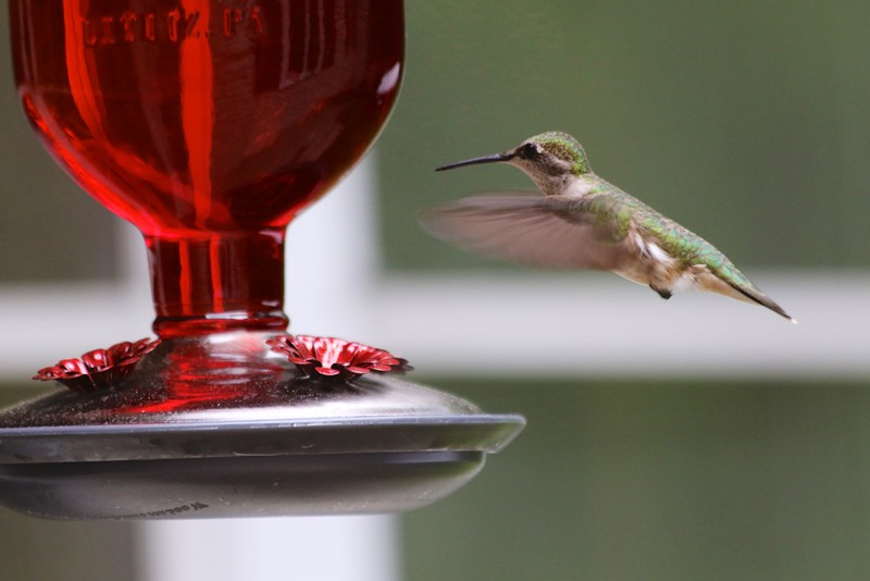 2016 SPRING AND SUMMER BIRDS 006