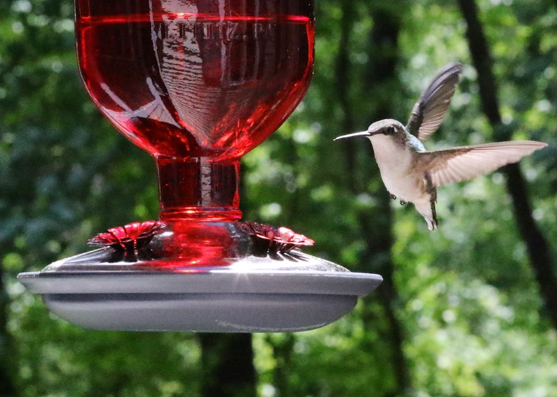 2016 SPRING AND SUMMER BIRDS 022