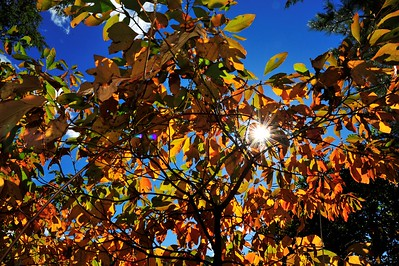 2016 Fall Colors