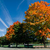 Foliage as seen at Coolidge Park in Fitchburg this October. SENTINEL & ENTERPRISE / Ashley Green
