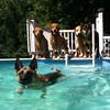 IMG_0080 Pool dogs Aug 5 2016