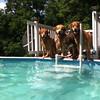 IMG_0084 Pool dogs Aug 5 2016