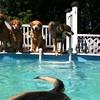 IMG_0077 Pool dogs Aug 5 2016