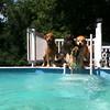 IMG_0079 Pool dogs Aug 5 2016