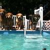 IMG_0076 Pool dogs Aug 5 2016