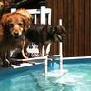 IMG_0078 Pool dogs Aug 5 2016
