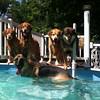IMG_0083 Pool dogs Aug 5 2016