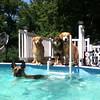IMG_0072 Pool dogs Aug 5 2016