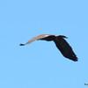 DSC_4149 Bald Eagle Sept 11 2016