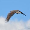 DSC_4145 Bald Eagle Sept 11 2016