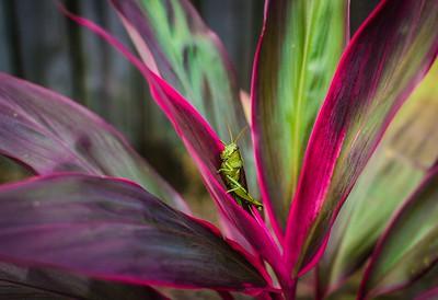 Grasshopper Delight