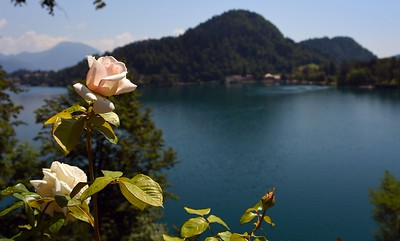 Lake Bled Beauty