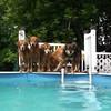 IMG_0021 Pool Dogs July 1 2016