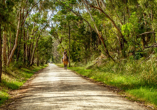 The Lilydale to Warburton Rail Trail