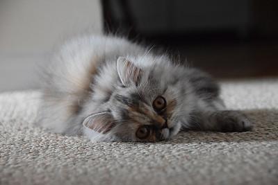 KittyPosing