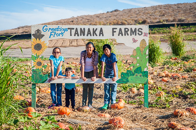 Tanaka Farms Pumpkin Patch:  October 8, 2016