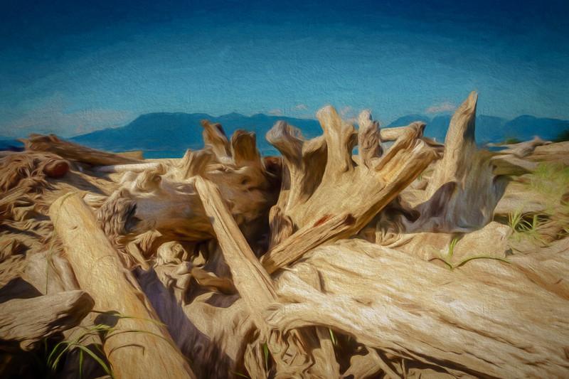Driftwood Pile