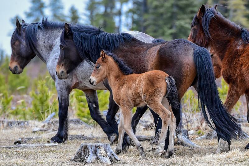 Dad, Mom & baby