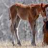 this is the foal with the ugly wounds on it's neck