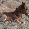This little foal was only hours old...mom was still cleaning  it and it was very wobbly when it tried to stand