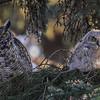 Mom & owlet