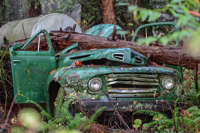I found this old truck in the dense forest at the golf club area in Harrison Mills looking for eagles.  If it could only tell the story.