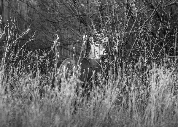 160107 Deer Enterprise