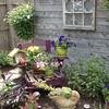 160721 Garden Walk 3