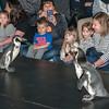 160423 Penguin Days 1