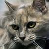 160713 Pet of the Week 1