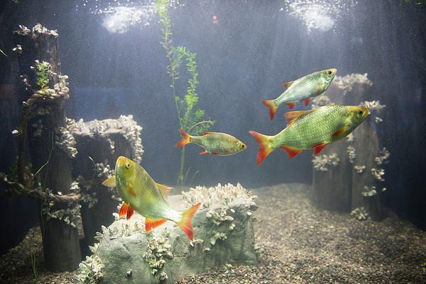 160906 CU Aquarium 5