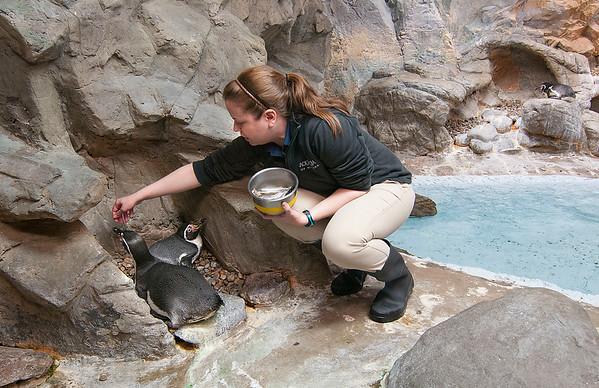 160303 Aquarium Updates 3
