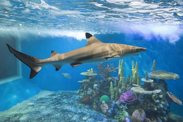 160906 CU Aquarium 2
