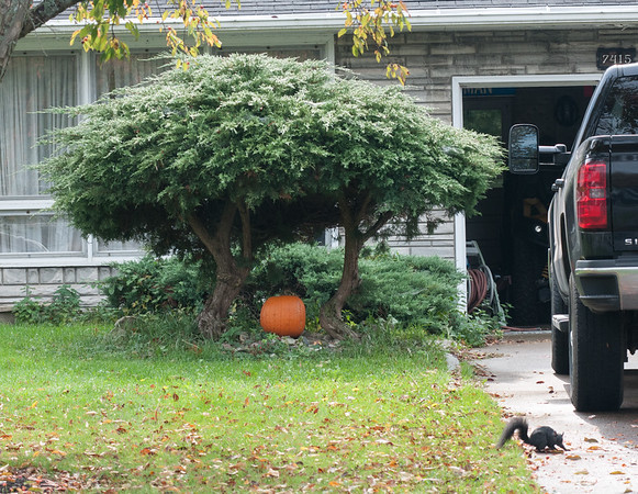This Joann Circle North home in the Town of Niagara took a minimalist approach to Halloween decoration. Also, black squirrels crossing your path are not as bad as a black cat, one might assume.