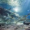 160802 Aquarium 1